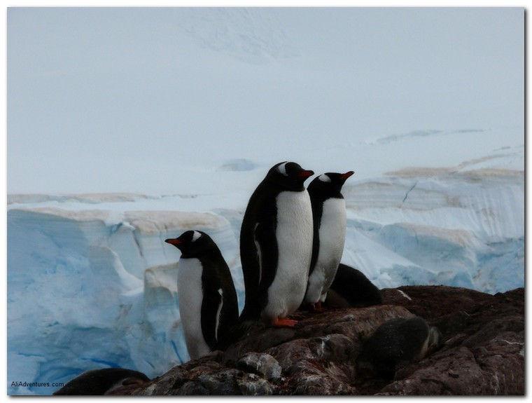 tTavel Photo Roulette Penguins at Dusk in Antarctica - Ali's Adventures