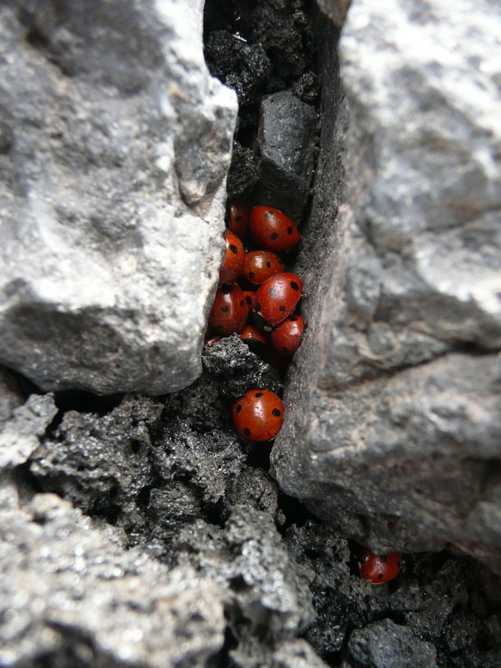 Travel Photo Roulette Ladybirds on Mt Etna Sicily - Food Travel Bliss