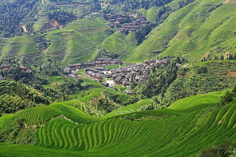 Travel Photo Roulette Longji Rice Terraces Dazhai China - cookiesound