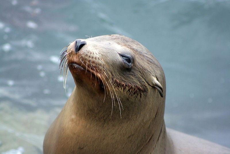 Travel Photo Roulette Sea Lion California Globetrottergirls