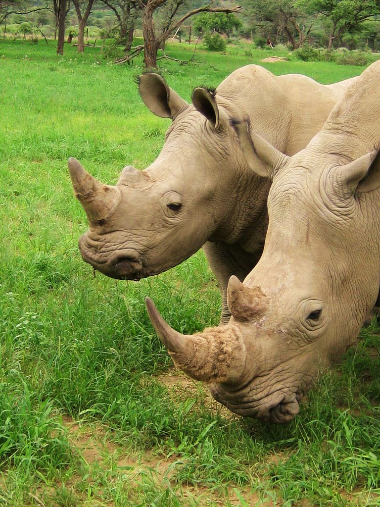 Travel Photo Roulette White Rhinoceros in Namibia - The Travel Bunny