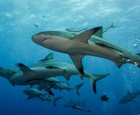 diving-with-sharks-featured