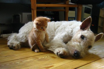pet-sitting-featured-cat-dog