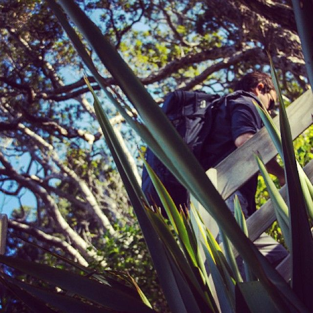 instagram-snapshots-of-the-coromandel-hiking-matapaua