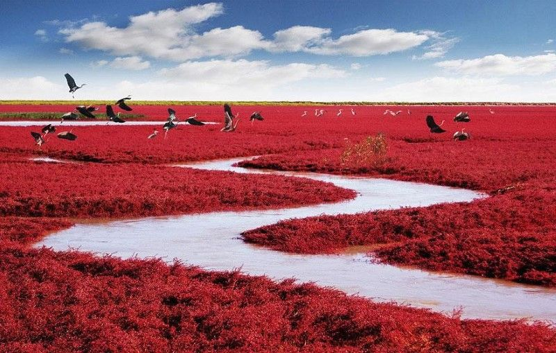 panjin-red-beach-china-1-inspiring-natural-design