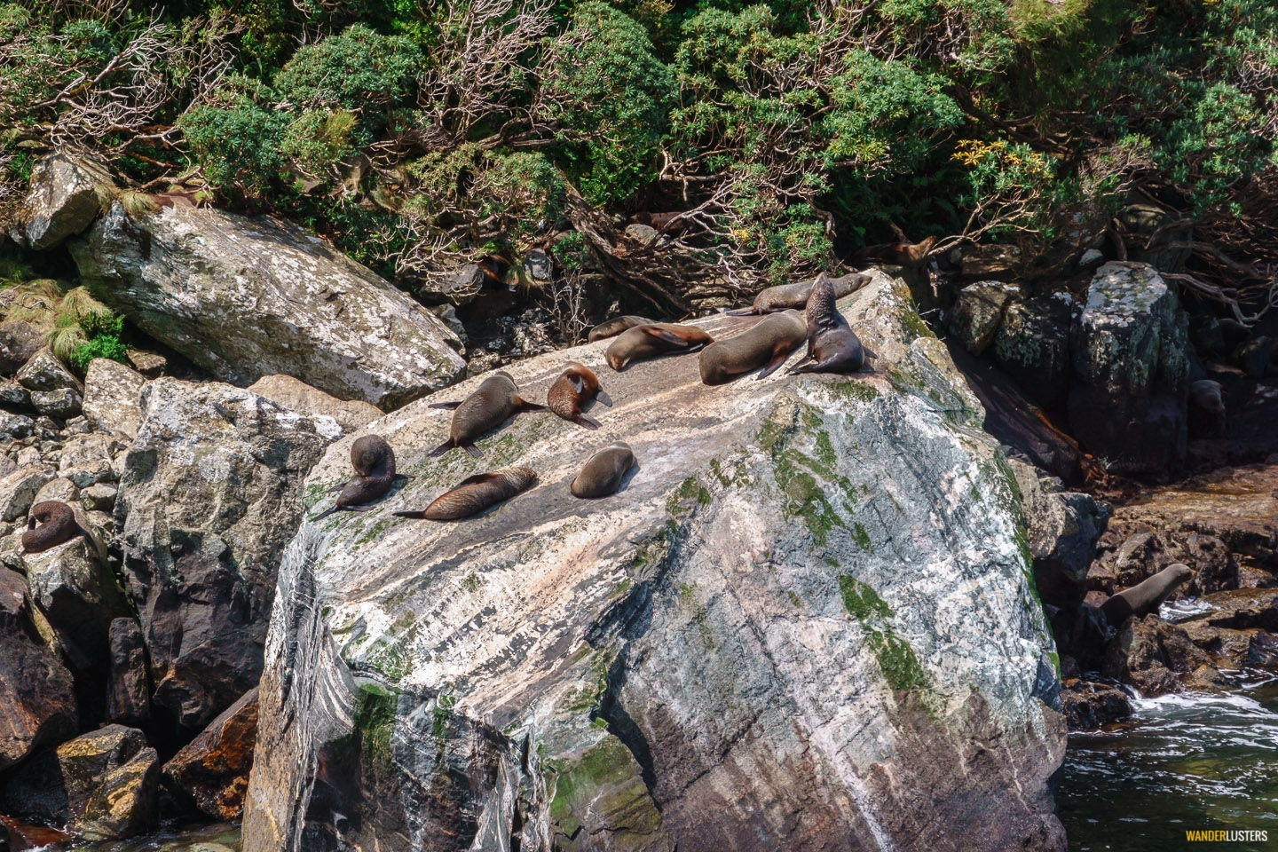 indomitable-milford-sound-southern-fur-seal