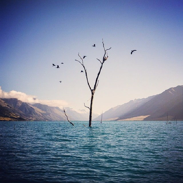 lake-wanaka-snapshots-submerged-tree