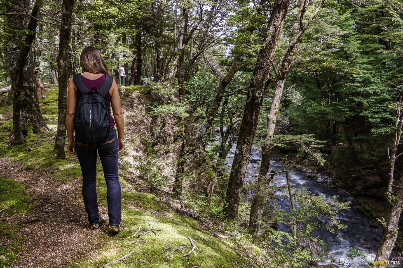 wanaka-river-journeys-forest