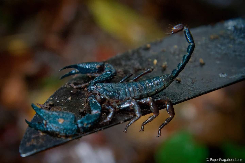 darien-park-scorpion-expert-vagabond