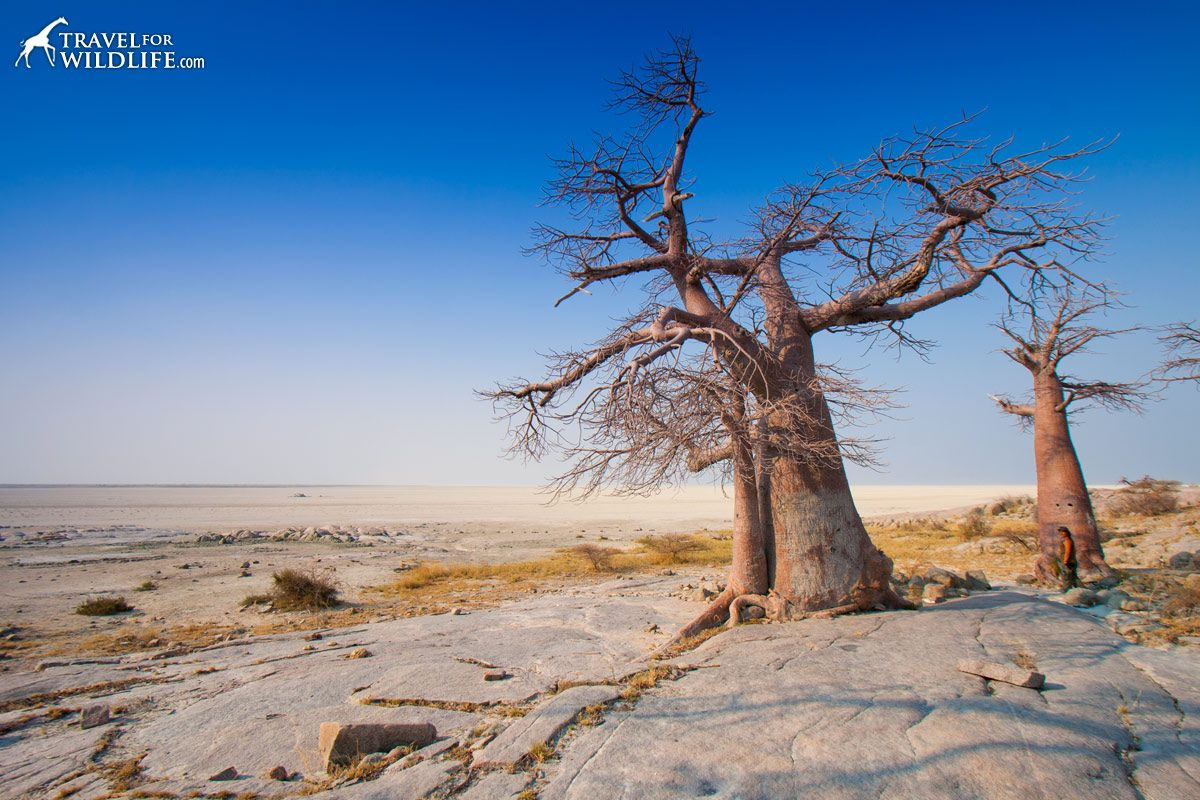 life in the kalahari kubu-island