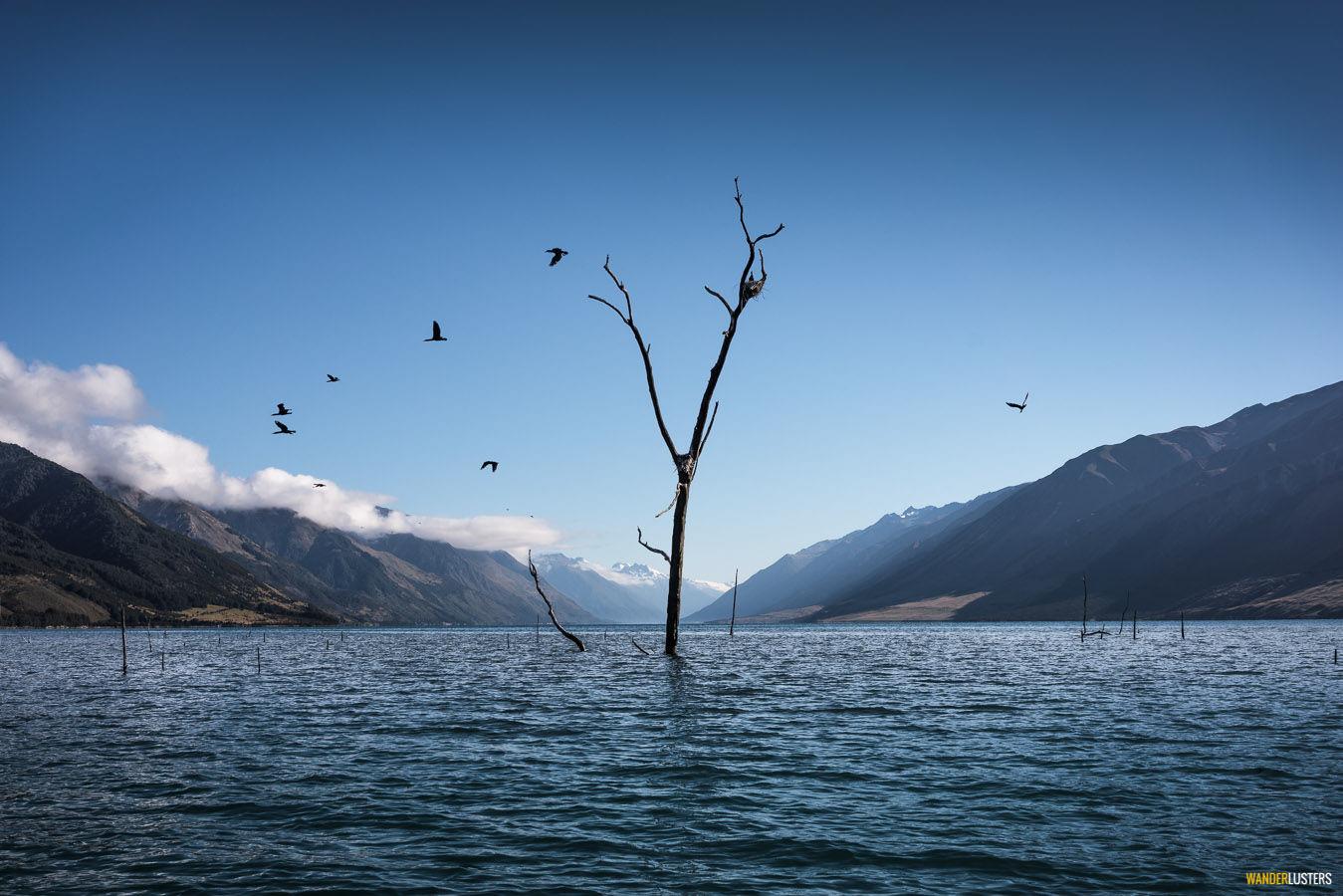 eerie-tree-lake-hawea
