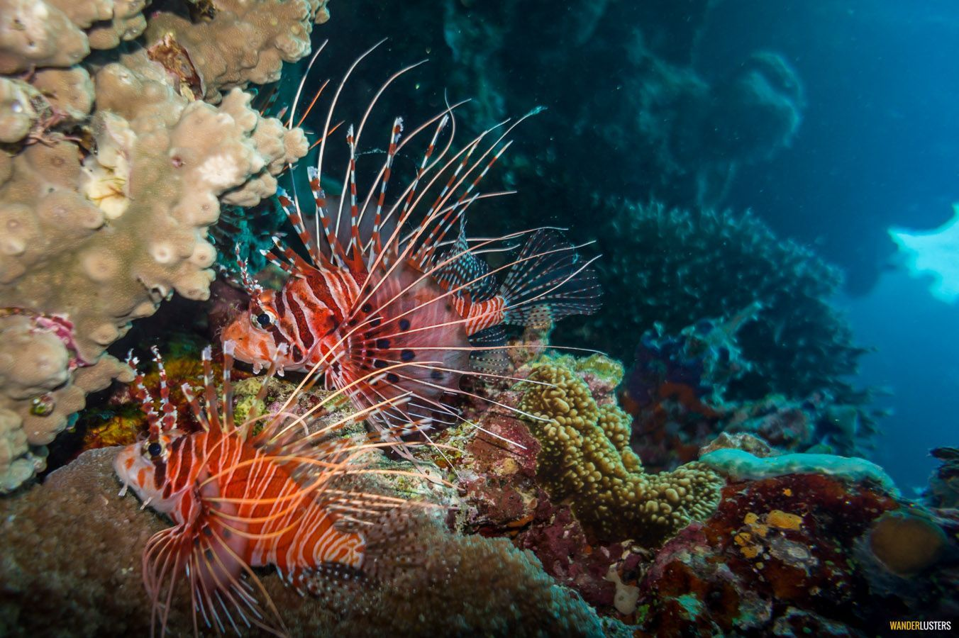 great-barrier-reef-lion-fish-coral-sea-colours