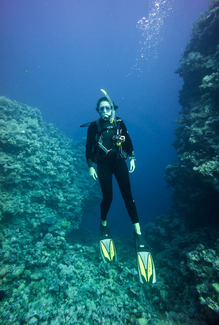 scuba diving osprey reef coral sea