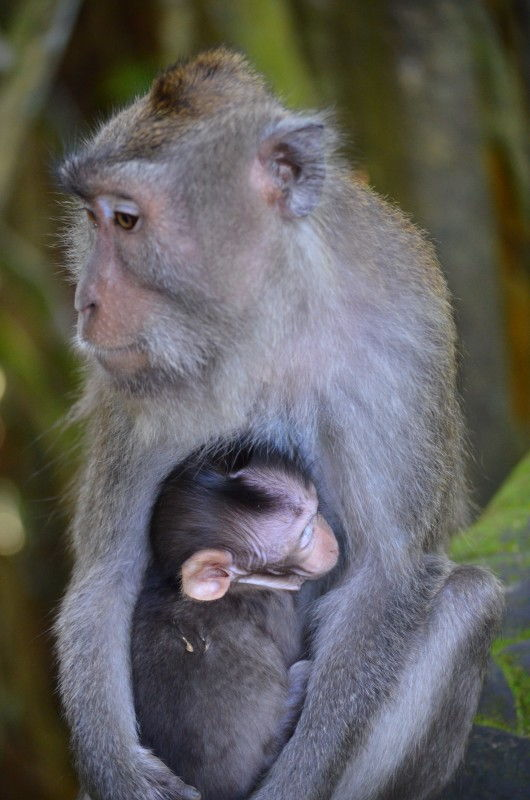 Travel Photo Roulette A Mother and Baby in Ubud Bali Indonesia - Getting Stamped