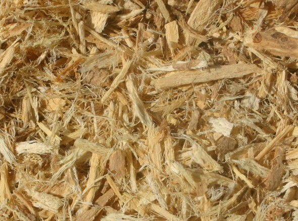 Astragalus_Root