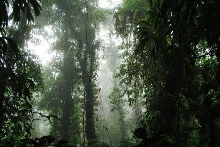 Costa Rica Top 5 Natural Wonders Monteverde Cloud Forest