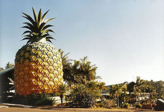 Australia's Big Things Pineapple Sunshine Coast Wanderlusters