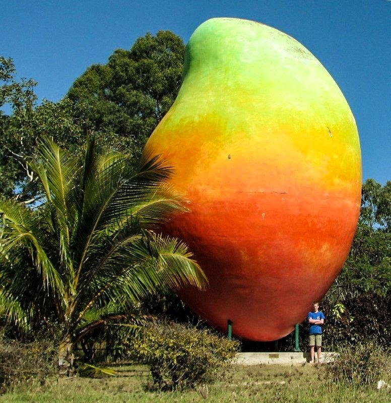 Australia's Big Things Bowen Mango Wanderlusters