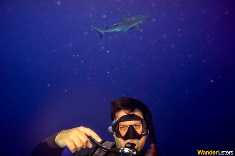 diving-with sharks-at-north-horn-confused