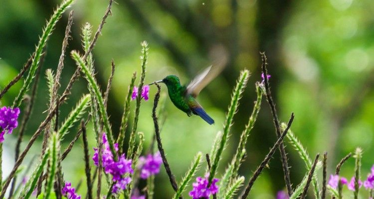 biodiversity-costa-rica-featured