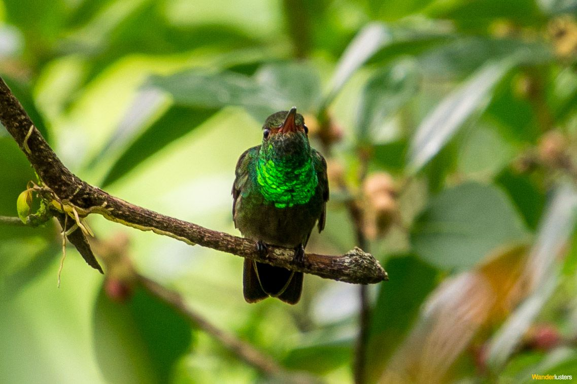 biodiversity of costa rica photo essay