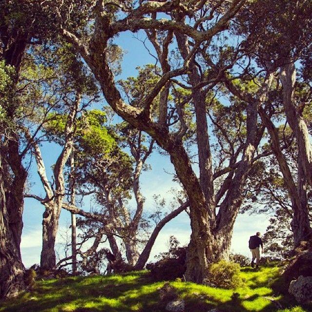 instagram-snapshots-coromandel-matapaua-beach