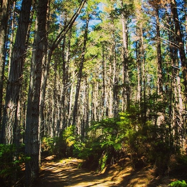 instagram-snapshots-of-the-coromandel-off-road-4x4