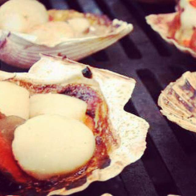 instagram-snapshots-of-the-coromandel-scallops