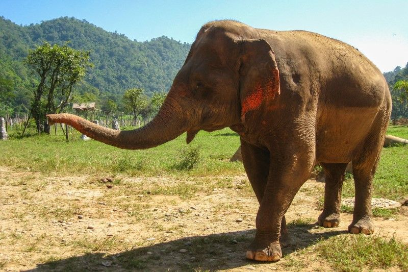 spotlight on ethical tourism in thailand