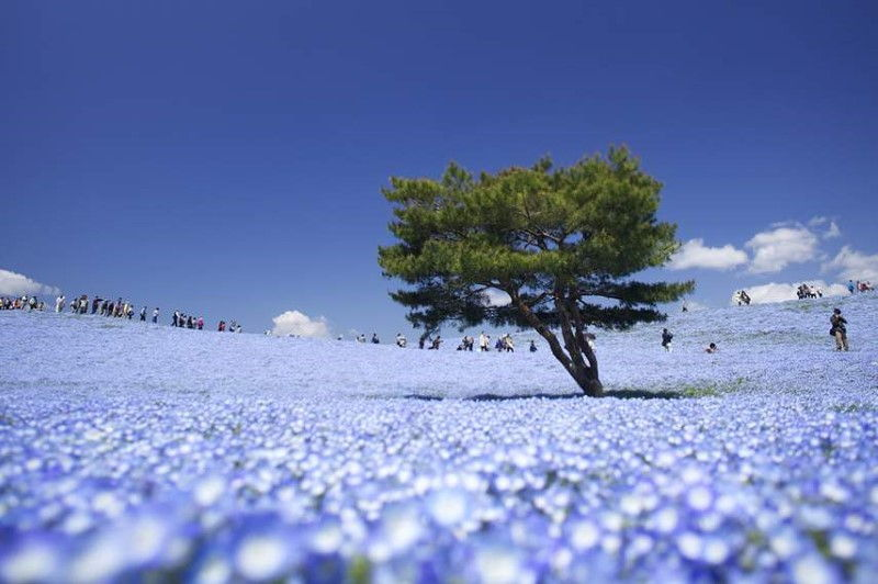 hitachi_seaside_park-inspiring-natural-design