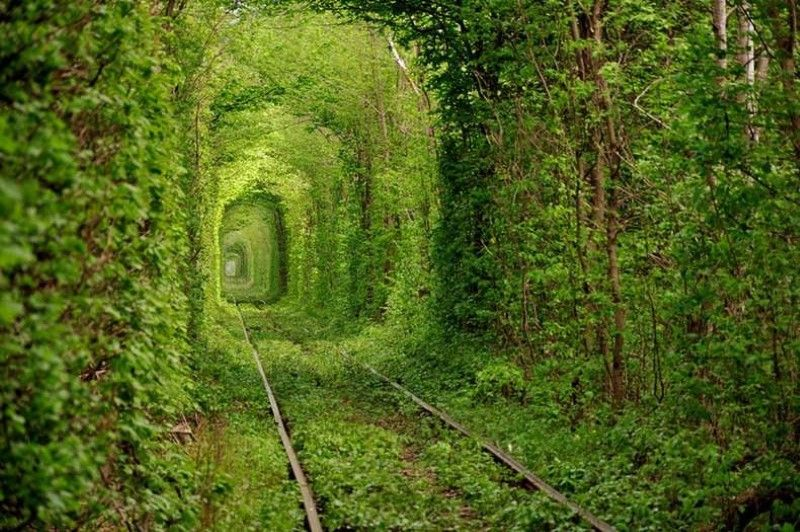 tunnel-of-love-inspiring-natural-design
