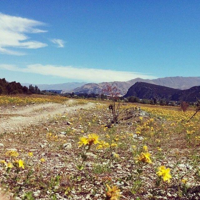 lake-wanaka-snapshots-mountain-biking