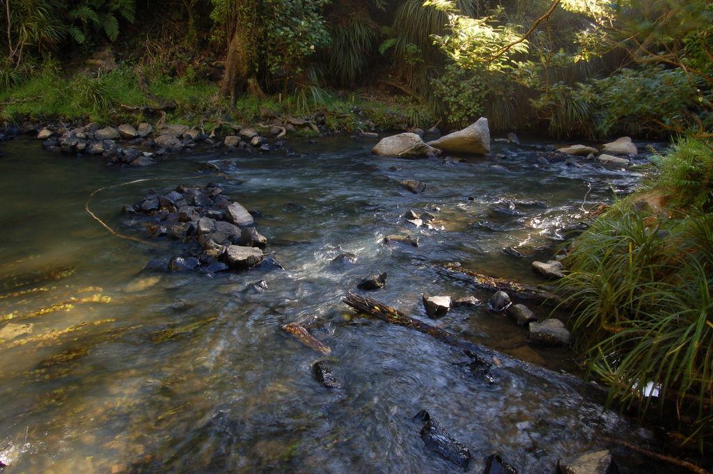 Tramping Tracks Of Tai Poutini National Park
