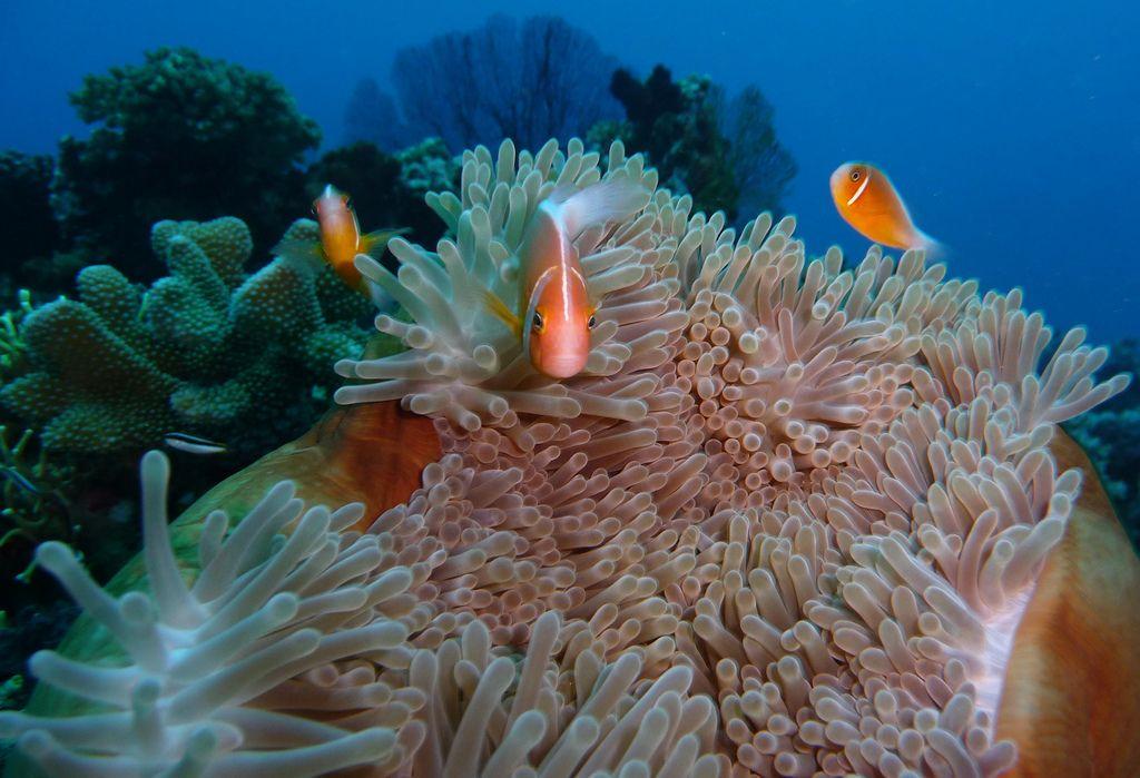 Inspiring dive sites somosomo-strait-fiji