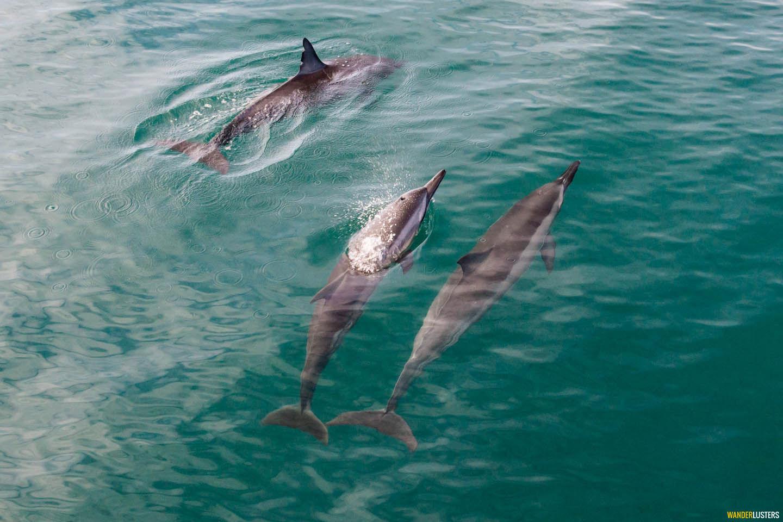 dolphins-napali-coast