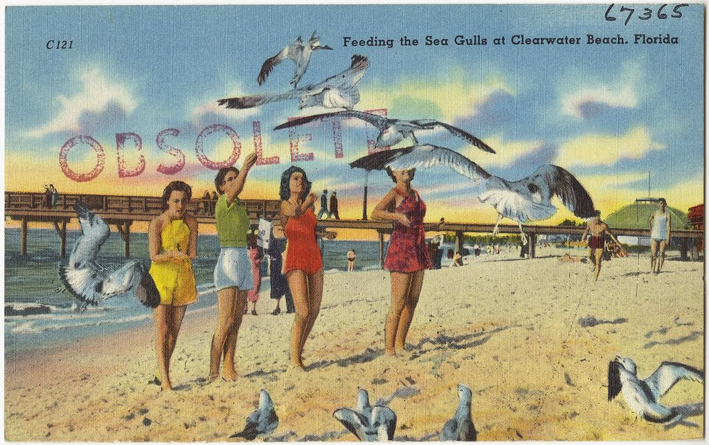 feeding-sea-gulls-clearwater-beach-postcard Clearwater Beach Travel Tips