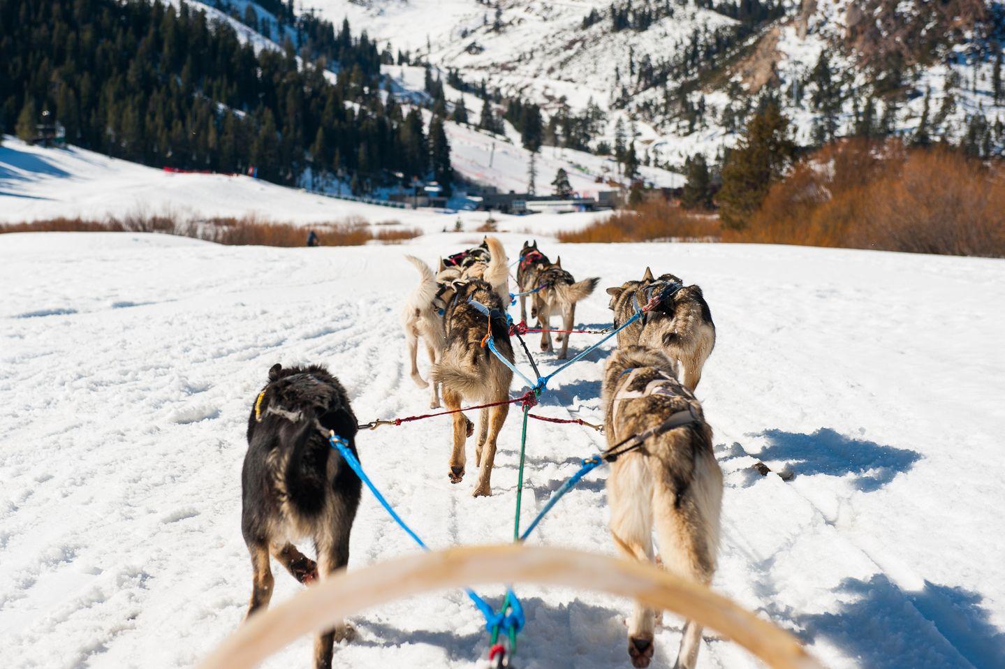 dog-sled