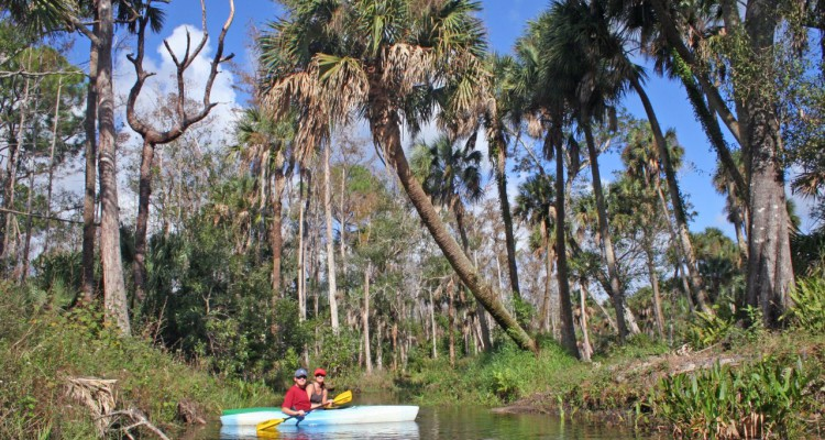 kayaking-loxahatchee