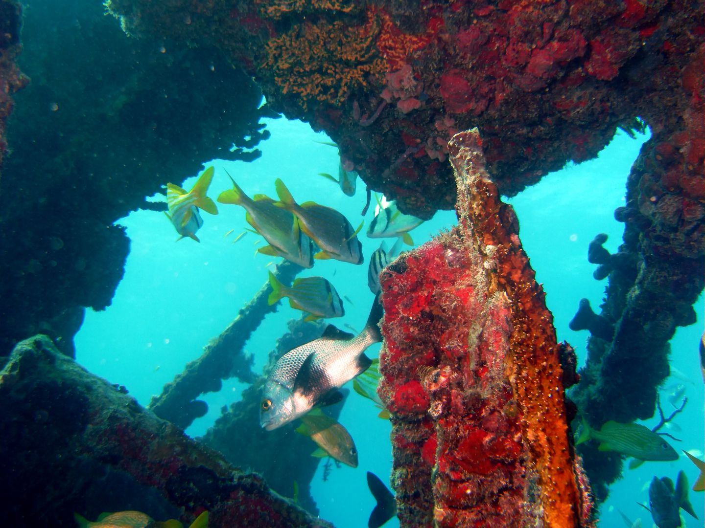 The Best Wreckreational Dives Near Miami Beach, FL