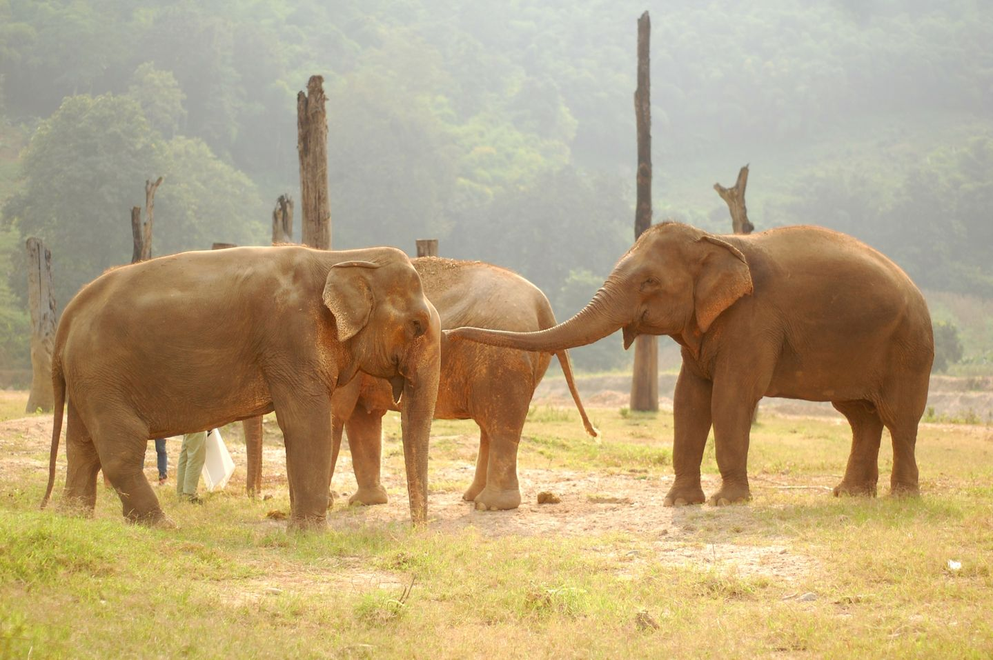 photos from southeast asia that will make you smile elephants southeast photo essay