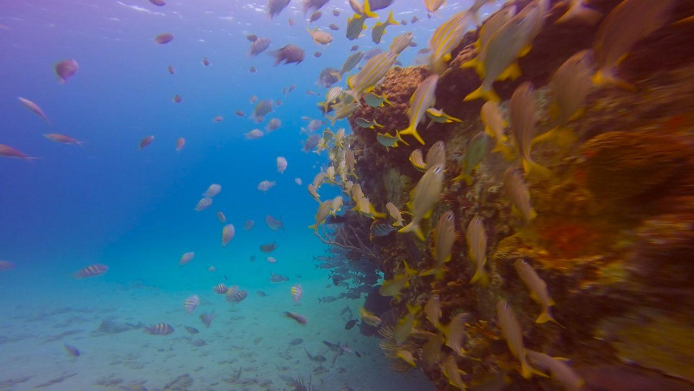 carlisle-bay-berwyn-fish