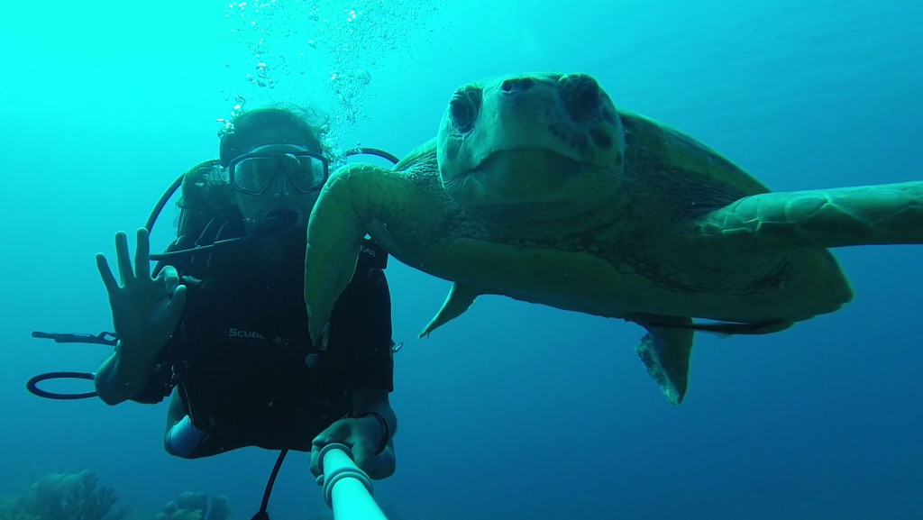 How to Take Part in Sea Turtle Conservation in Costa Rica