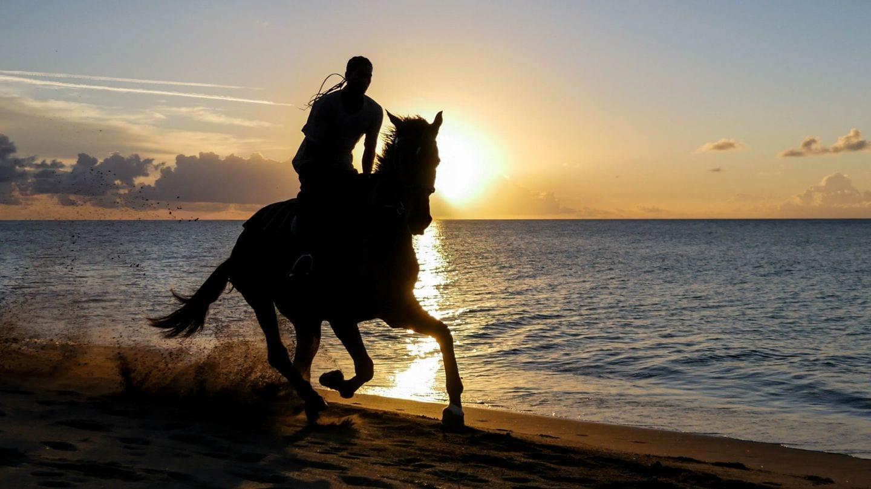 cades-bay-nevis-sunset-horse-4kphoto (5)
