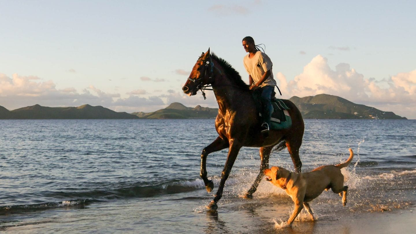 horse-cades-bay-nevis-4k-photo (1)