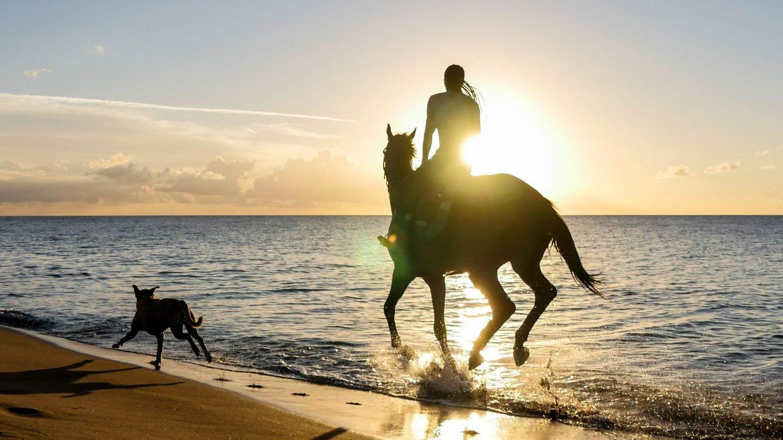 horse-cades-bay-nevis-4kphoto
