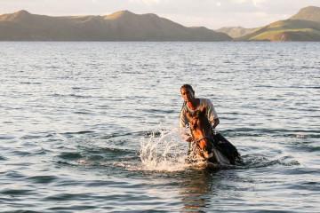 horse-ocean-caribbean-nevis-4k-photo