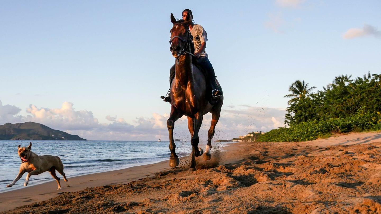 horse-rider-dog-cades-bay-nevis-4kphoto