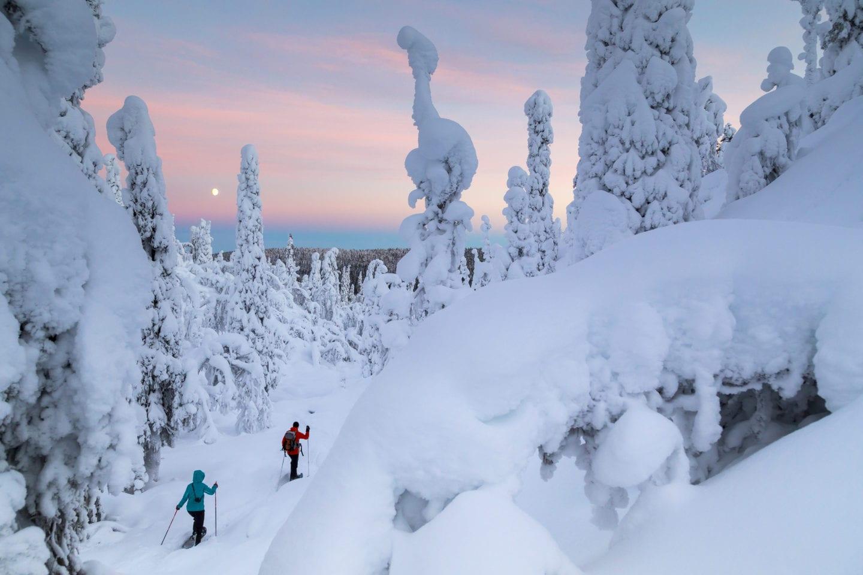 Lumikenkäilijät metsässä, Muonio tammikuu 2015#Hiking in forest, Muonio Finland january 2015